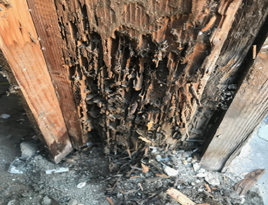 Termite Damage – How to Repair Termite Damage in Your Home