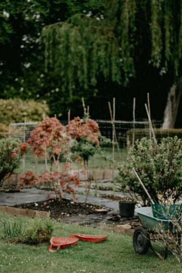 How to Garden at Home | Guide for Beginners